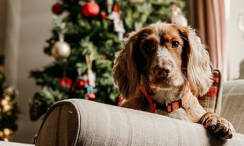 6 Ways To Prepare Your Pet For Holiday Company