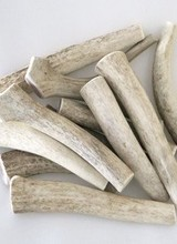 Naturally-Shed Deer Antlers