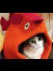 Dharma Dog Karma Cat Fish Cat Cave
