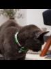 Hiro + Wolf Combs Cat Collar