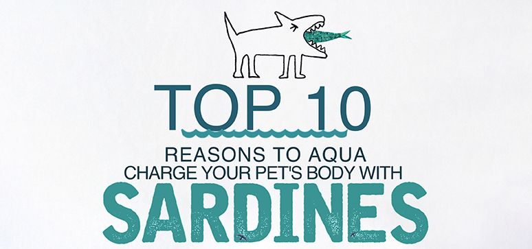 Top 10 Reasons To Aqua Charge Your Pet's Body With Sardines