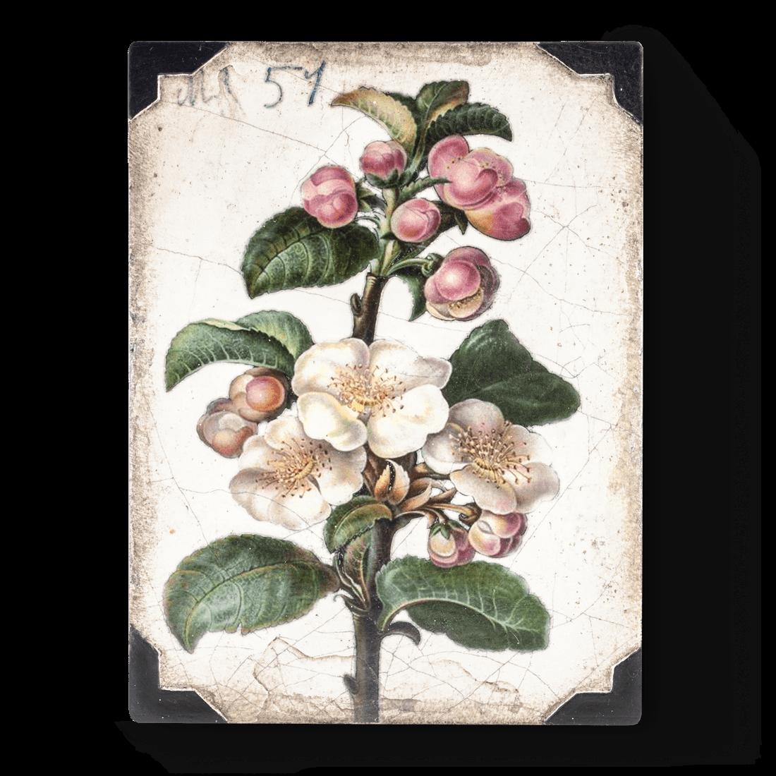 Sid Dickens Apple Blossom