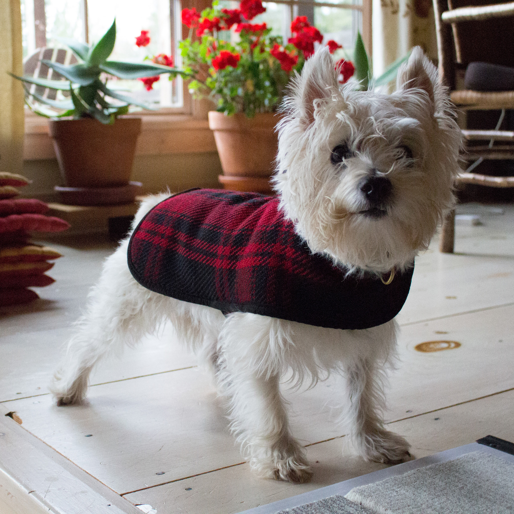 The Birch Store Red Plaid Dog Coat