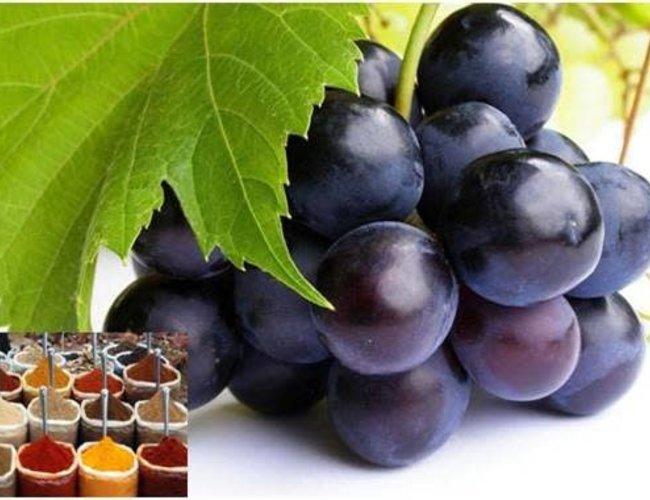 Sous les oliviers Vinaigre de vin Lambrusco curry  Nouveau New