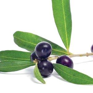 Sous les oliviers Huile d'olive extra vierge Arbequina de Californie