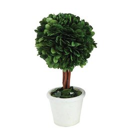 Perserved Boxwood Topiary