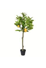 3' Potted Lemon Tree