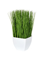 """11.5"""" Green Potted Grass"""
