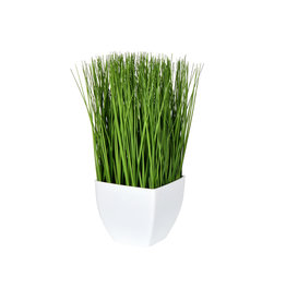 "11.5"" Green Potted Grass"