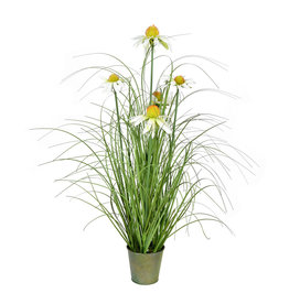 Green Daisy Grass in Iron Pot 24""