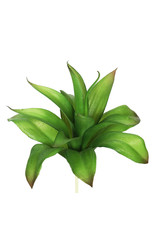 """8"""" Agave Green"""