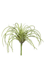 "5"" Tillandsia Pick"