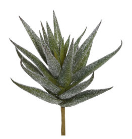 Aloe Vera Pick