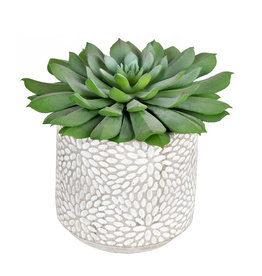 Green Potted Succulent