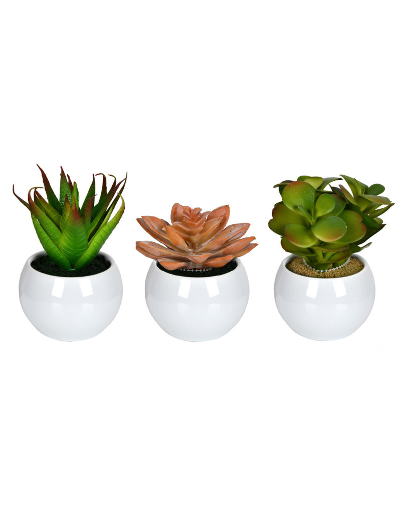 "Succulent in White Pot 5"""