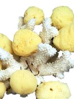 Silk Facial Sponge