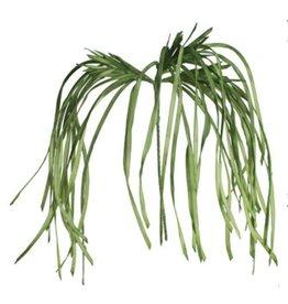 Botanica #2183 Lily Grass
