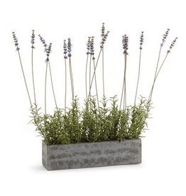 "French Lavender in Concrete Trough 19"""