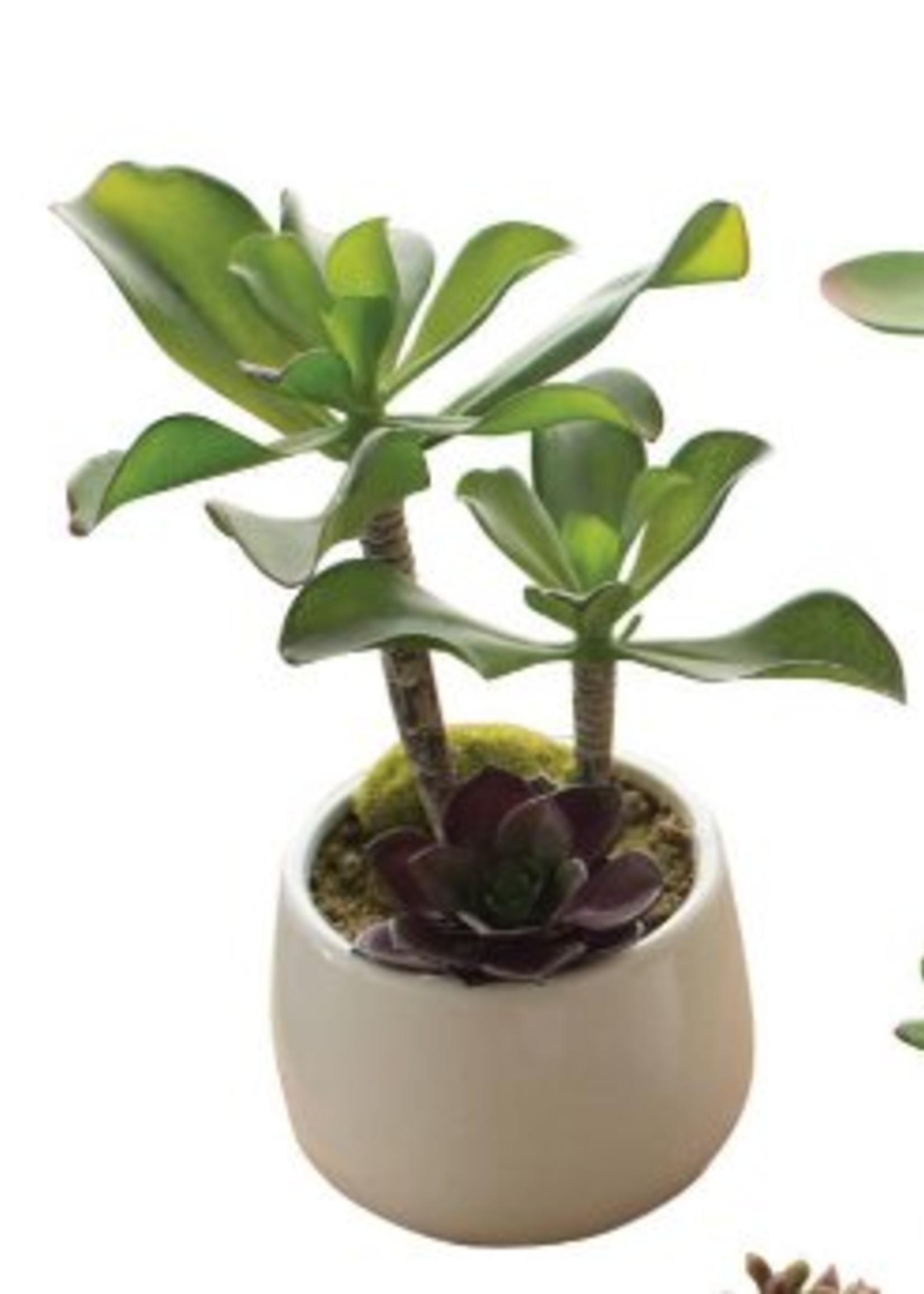 Artificial Succulents in White Pot