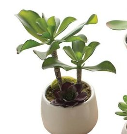 Artificial Succulents in White Pot