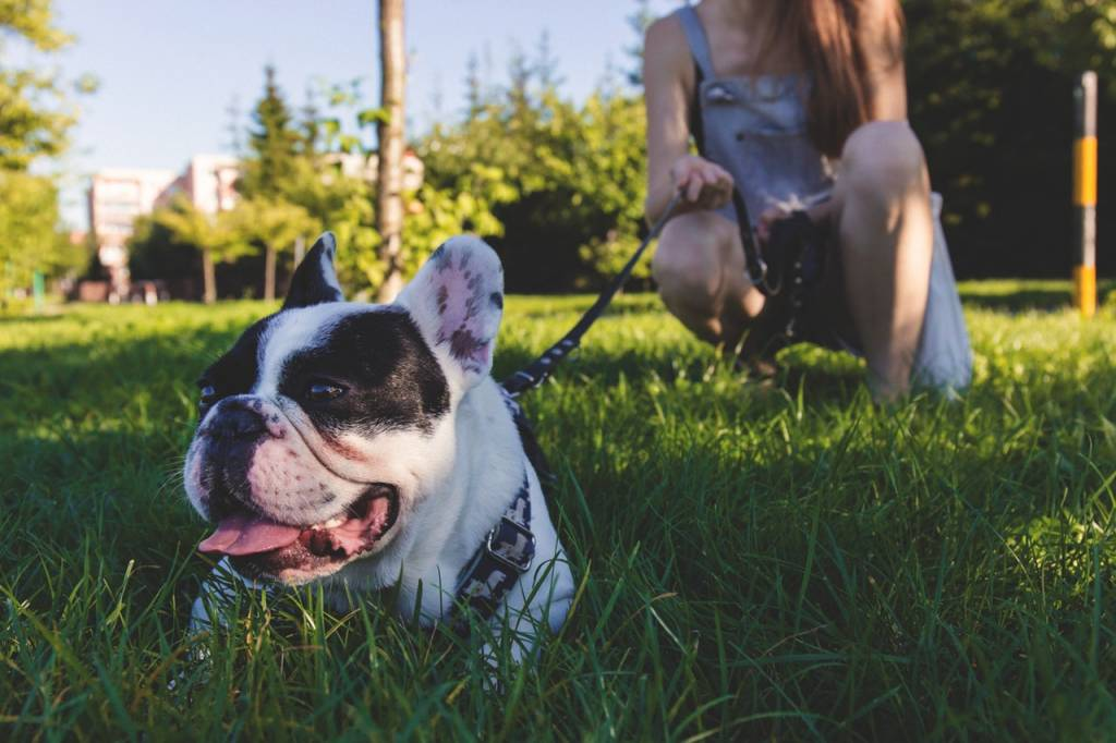 The Do's and Don'ts of Taking Your Dog to Dog Parks