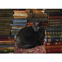 Cobble Hill Puzzles Cobble Hill Puzzle 1000pc Library Cat