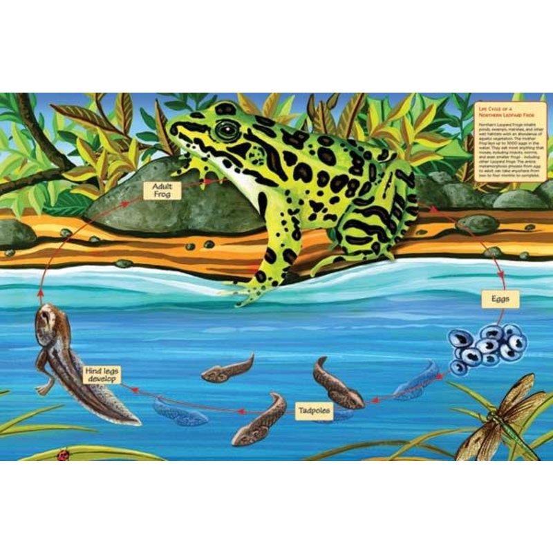 Cobble Hill Puzzles Cobble Hill Floor Puzzle 48pc Frog