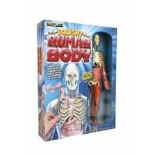 SmartLab Toys SmartLab Toys Squishy Human Body