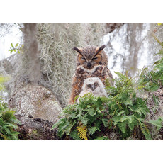 Cobble Hill Puzzles Cobble Hill Puzzle 1000pc Great Horned Owl