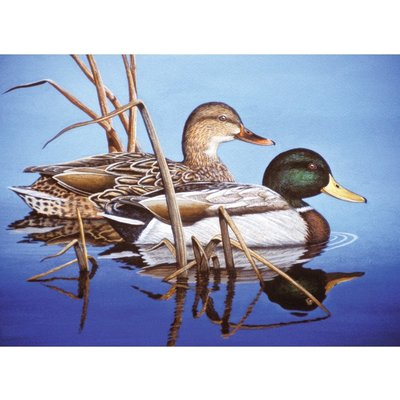 Paint by Number Large Blue Mallards
