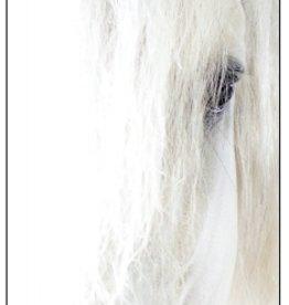 Asmar Asmar Equestrian Greeting Card