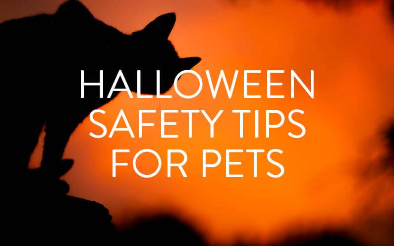 Five Tips To Keep Your Pet Safe This Halloween