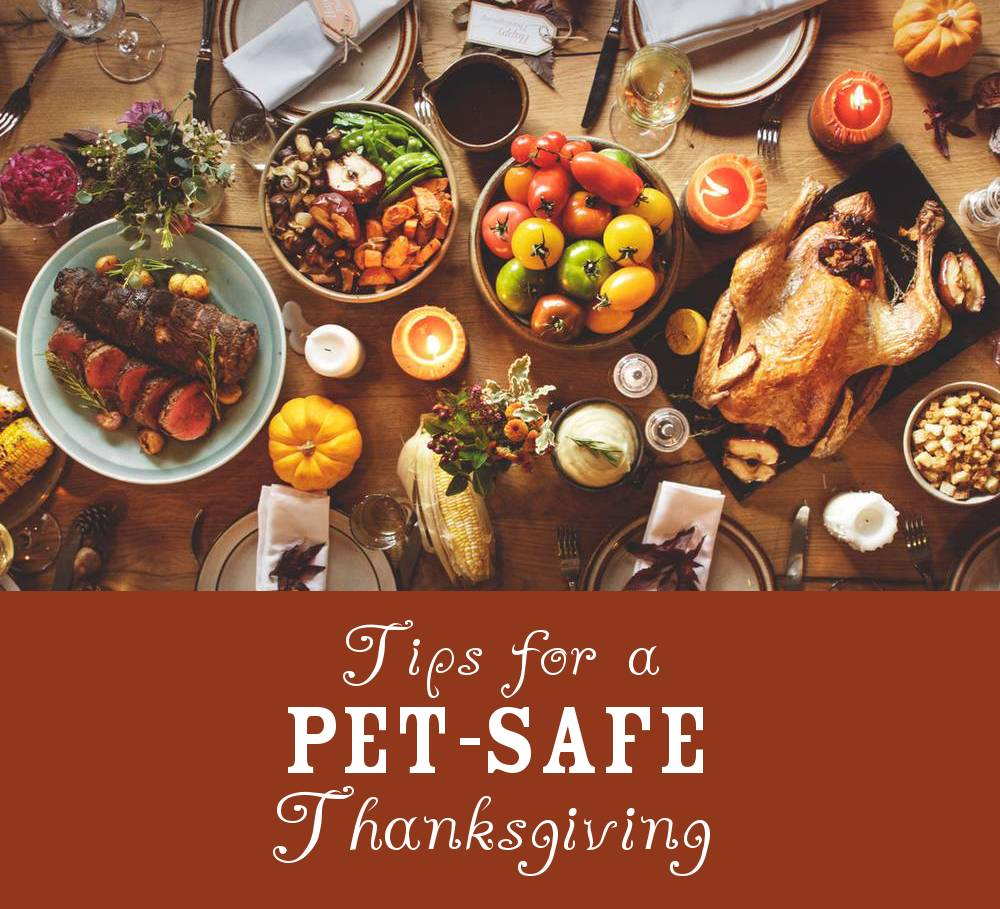 Tips for a Pet-Safe Thanksgiving