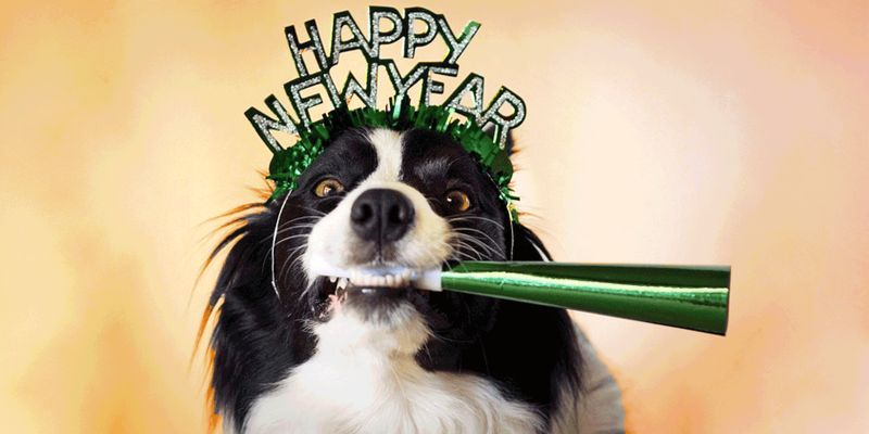 New Year's Resolutions: Pet Edition!