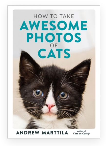 hachette book group How to Take awesome Cat Photos