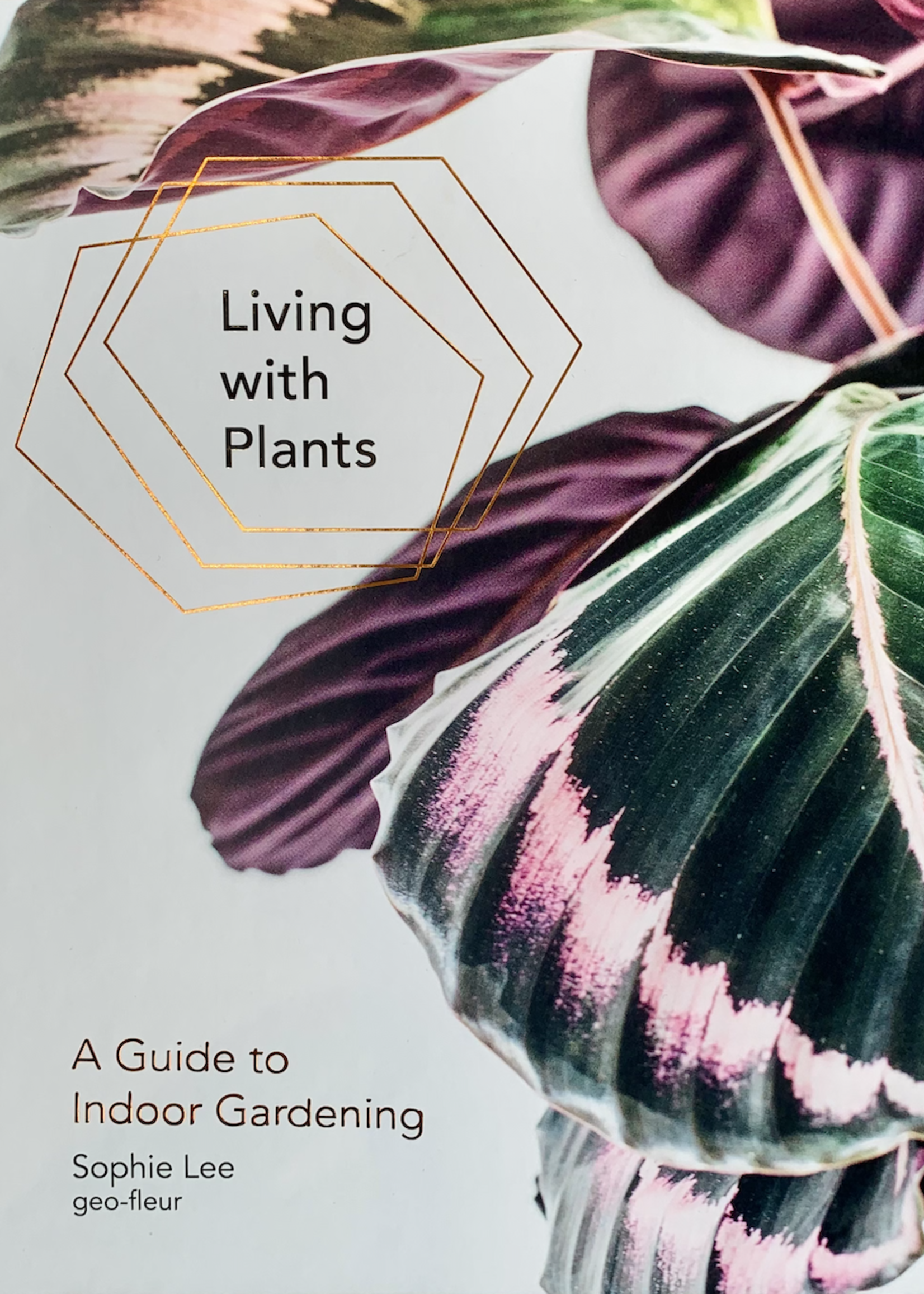 hachette book group hachette living with plants book