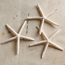 Homart Small Finger Starfish