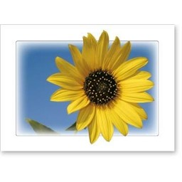 Naturally Kansas Notecards, pkg of 8