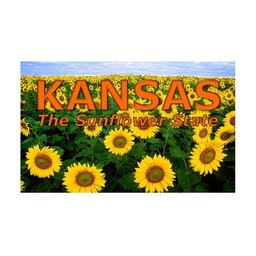 Postcard - Kansas Sunflower Field