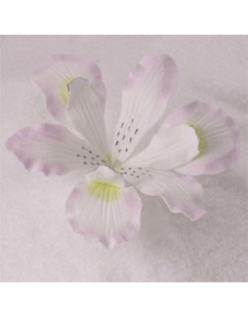 SUGAR FLOWER IRIS WHITE