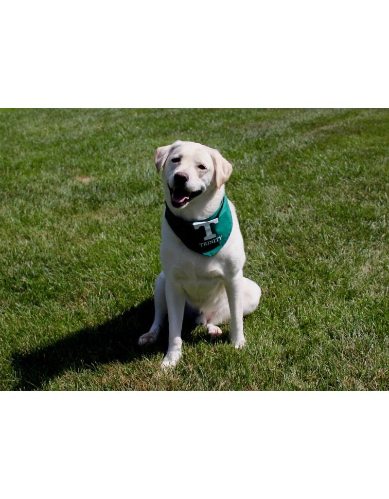 All Star Dog Trinity Dog Bandana