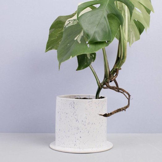 Virginia Sin Confetti Planter