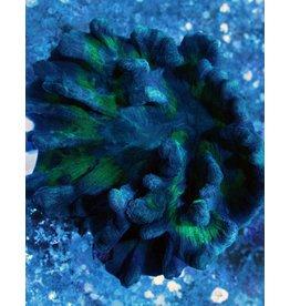 Spiny Cup Pectinia Coral (Pectinia sp.)