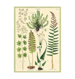 Cavallini Papers Fern Wrap Sheet