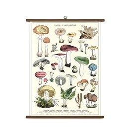 Cavallini Papers Mushroom School Chart