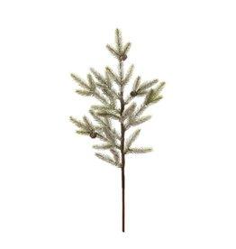 Creative Co-op Pine Branch, Md