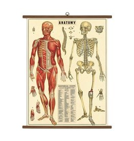 Cavallini Papers Anatomy School Chart