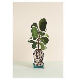 Seltzer Goods Fiddle Leaf Fig Plant