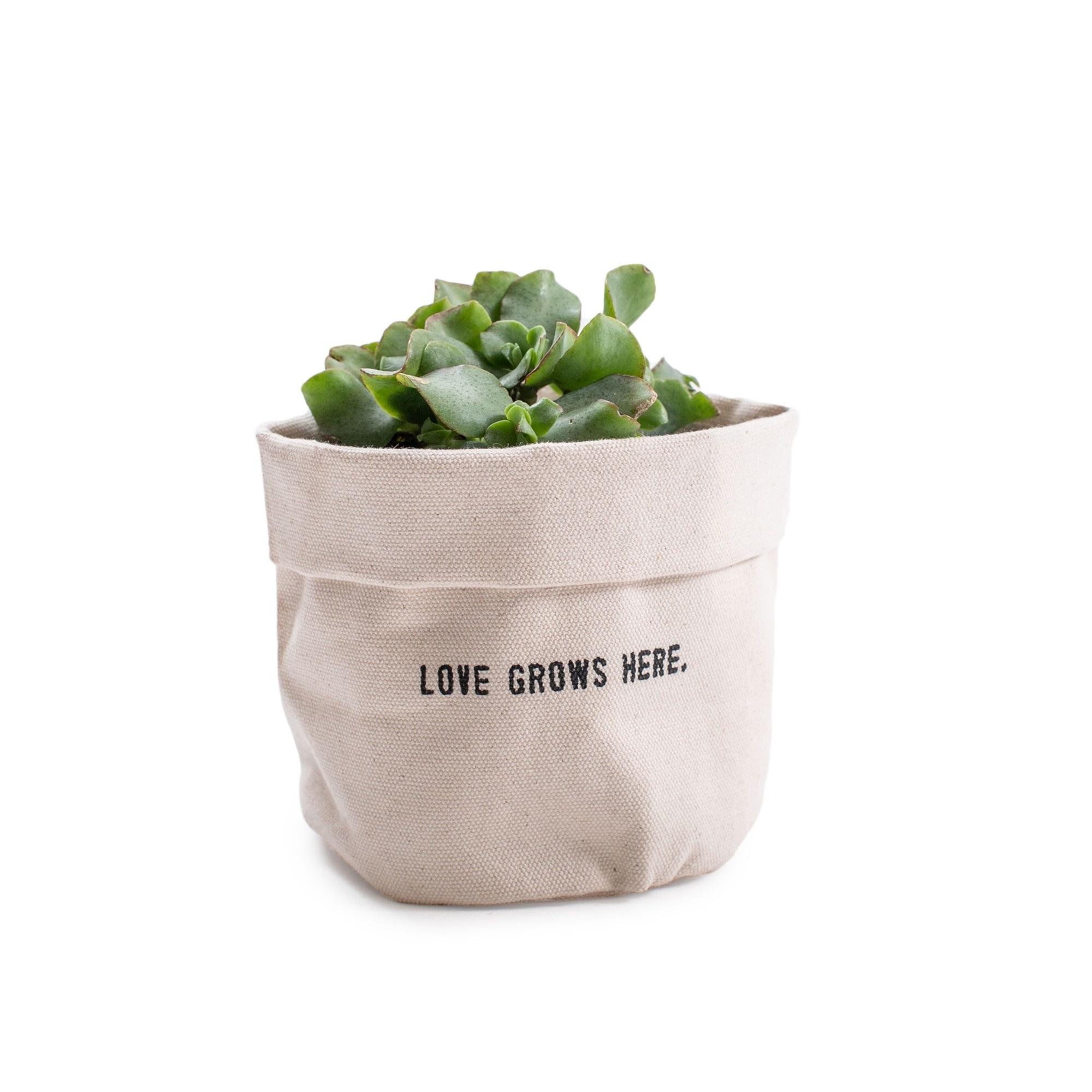 SugarBoo Designs Canvas Planter: Love Grows, Sm