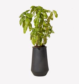 Modern Sprout Black Planter, Basil